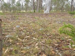 Marsden Park - Indigenous Stone Work Site  003