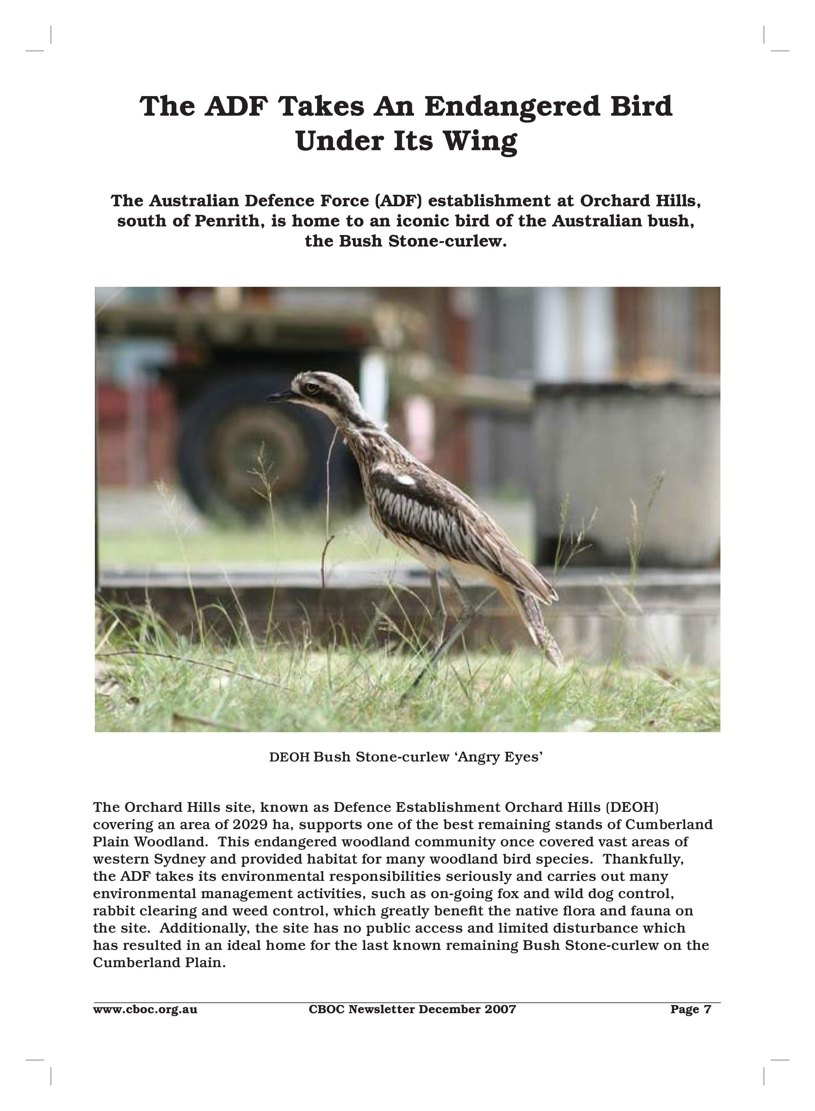 Bush Stone-Curlew - Orchard Hills-page-0 (1)