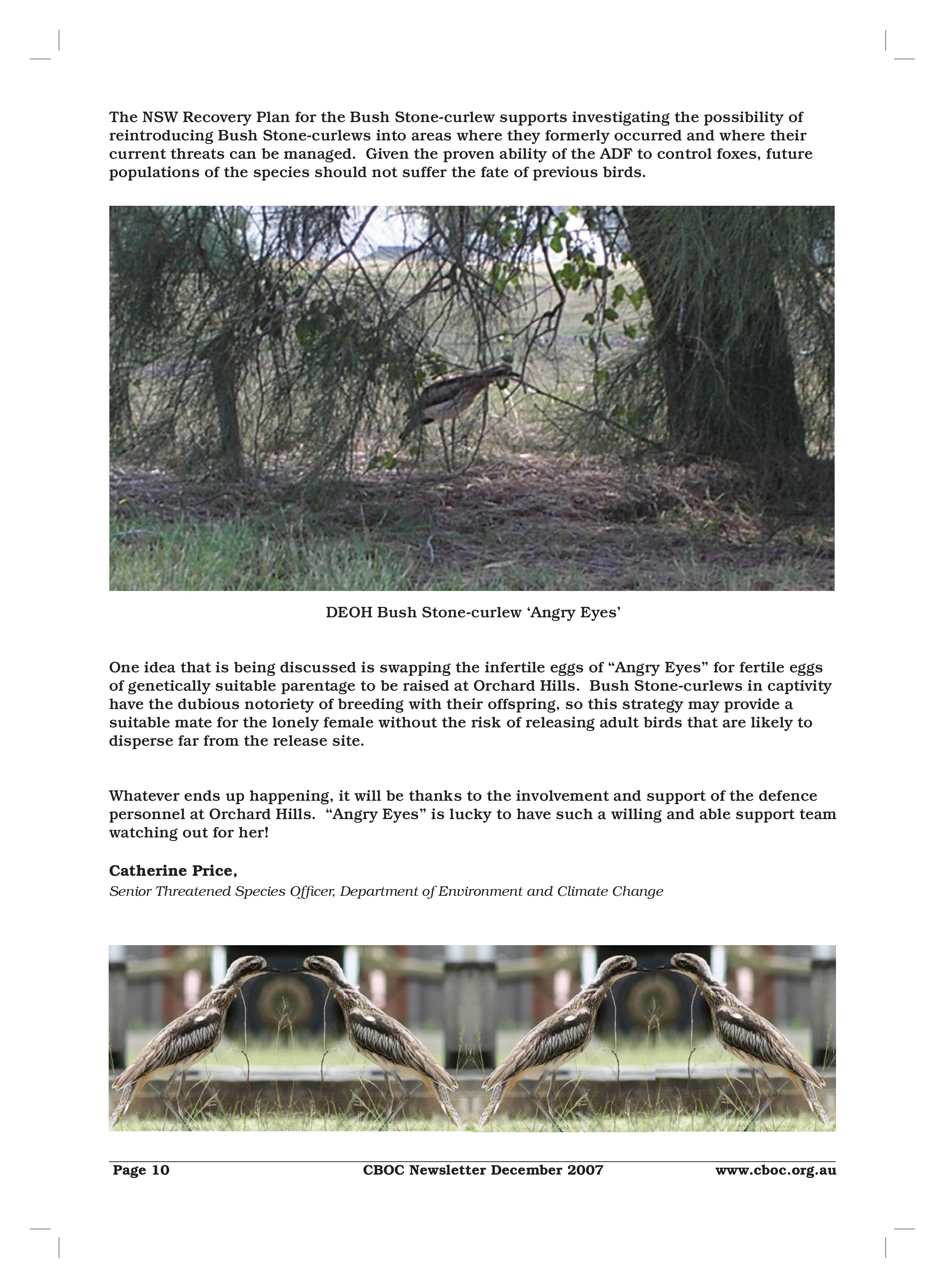 Bush Stone-Curlew - Orchard Hills-page-3